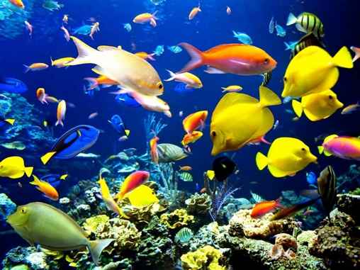 the coral reef ecosystem essay Science essays: the coral ecosystem and how it is changing.
